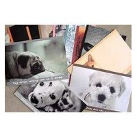 Lot cartes chiens